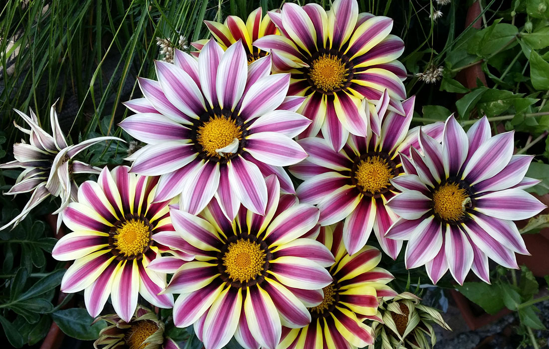 Blumen_bunt