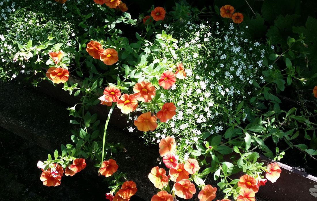 Blumen_orange